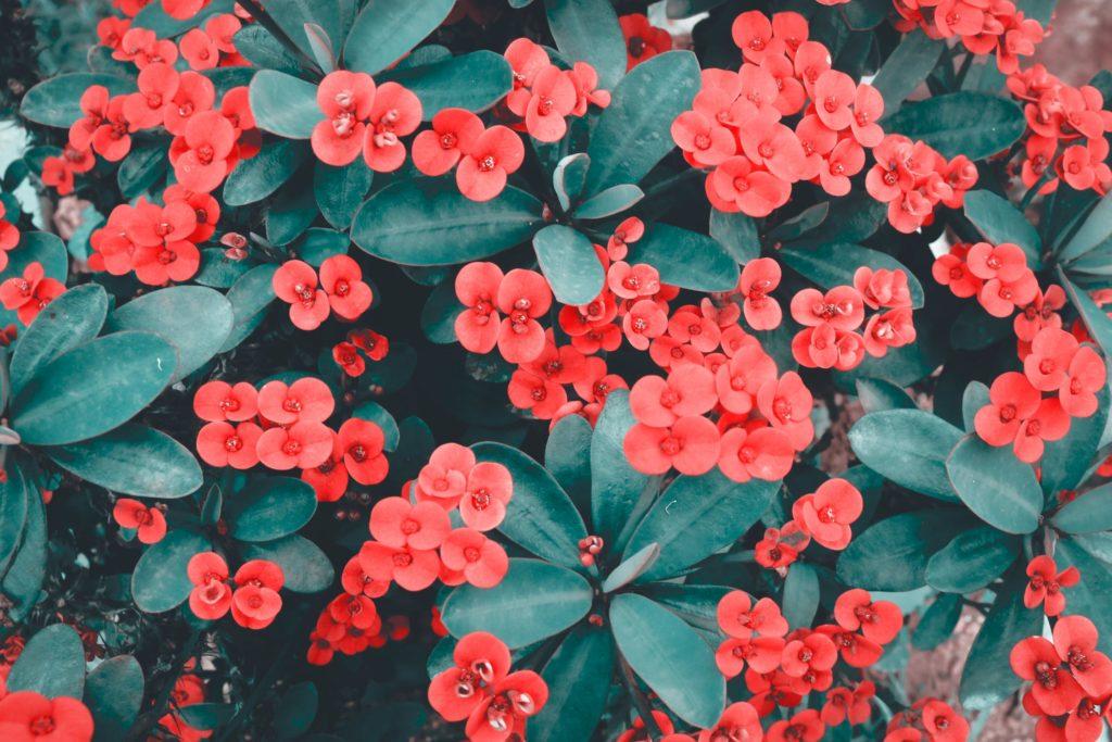 maak je tuin lente klaar en plant eenjarige planten