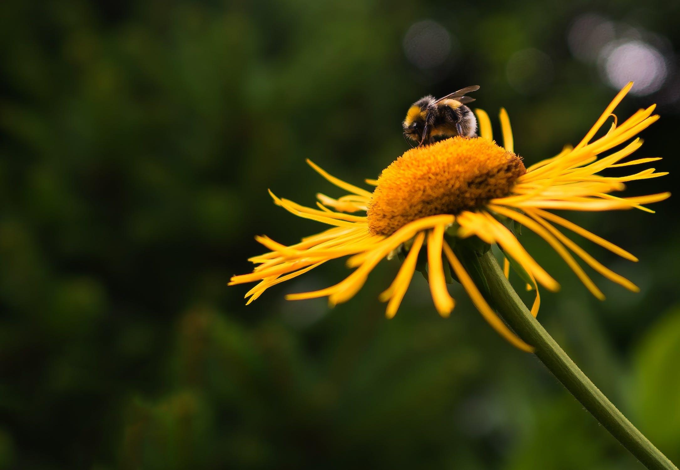 insectvriendelijke planten voor insectvriendelijke tuin
