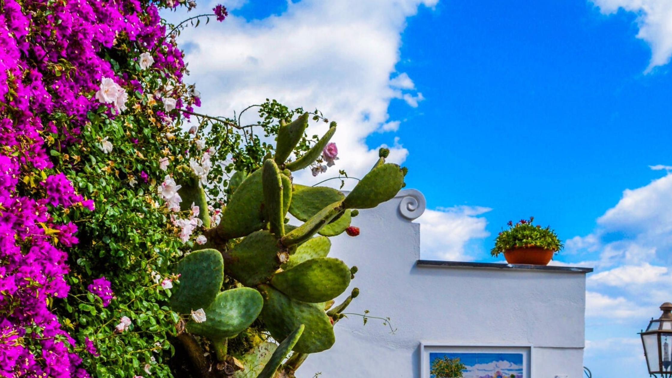 Mediterrane tuin inspiratie voorbeelden