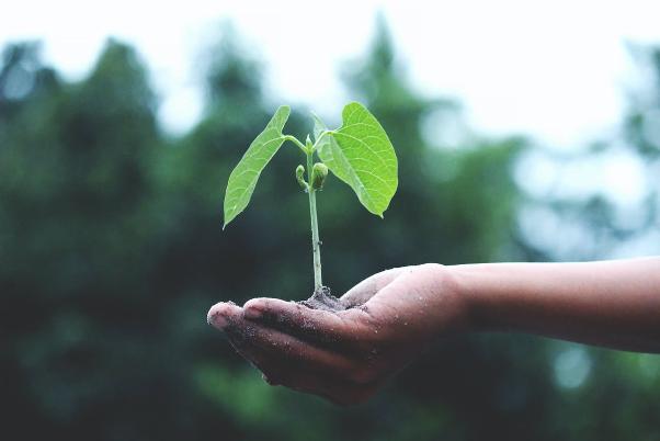 Low budget tuin idee Planten stekken