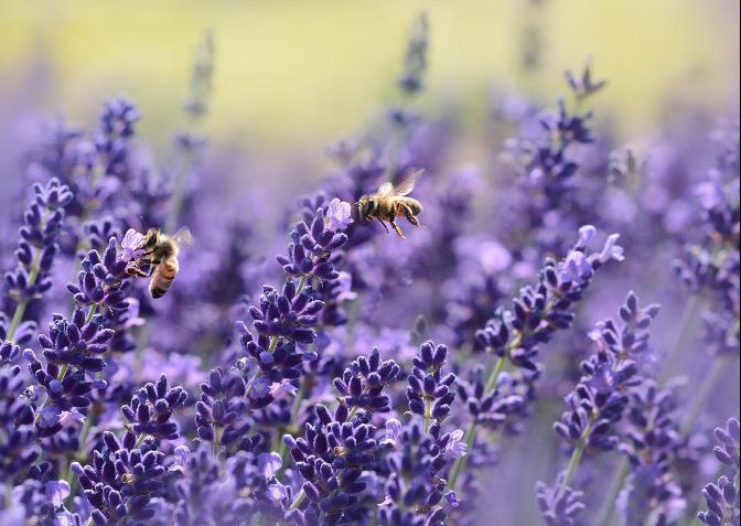 Tuintrend 2021 insecten in de tuin